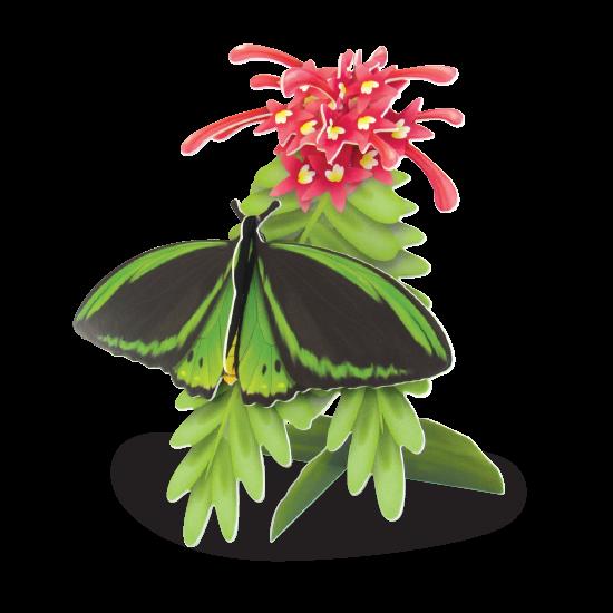 Birdwing Butterfly Doodad