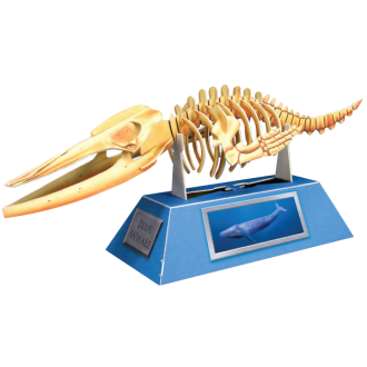 Blue Whale Skeleton Doodad