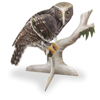 Powerful Owl Doodad