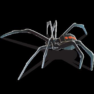Redback Spider Doodad