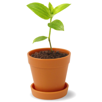 Mini Plant Pot with Seeds
